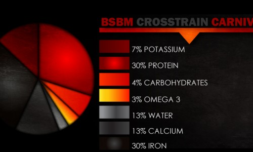 BSBM-Crosstrain-Graphs_Carnivore